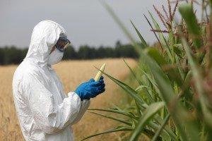toxic crops